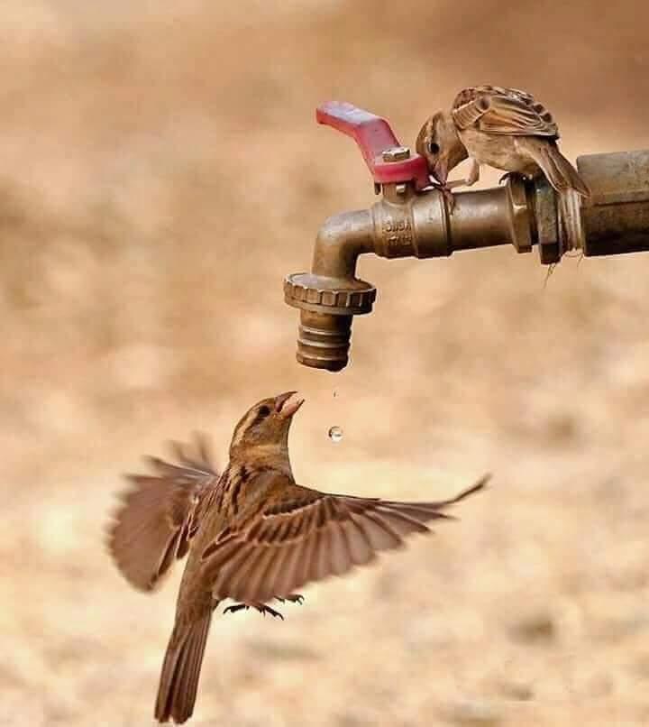 Minim, Ketersediaan Air Baku di Kota Kupang