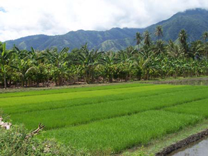 Profesor IPB Ini Sebut Lulusan Pertanian Lebih Senang Kerja di Bank
